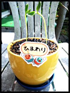 yoshinaga2.jpg